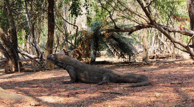 Pulau Komodo telah diakui sebagai salah satu situs Warisan Dunia UNESCO.