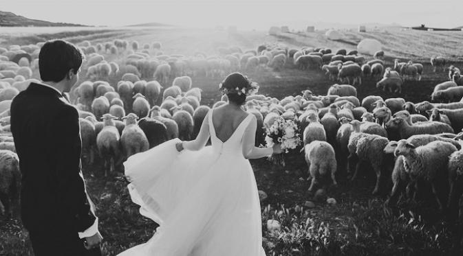 Foto pra-wedding di antara kawanan domba (sumber Cosmopolitan.com)