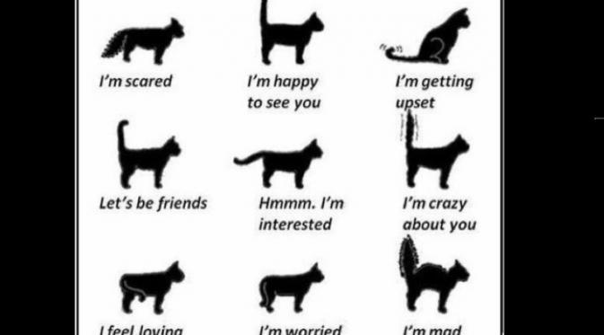Unduh 65+  Gambar Kucing Sedih Bergerak Paling Imut Gratis
