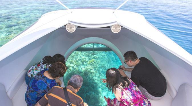 Glass Bottom Boat & Pulau Penyu