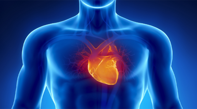 Ilustrasi penyakit jantung. | Via: istimewa